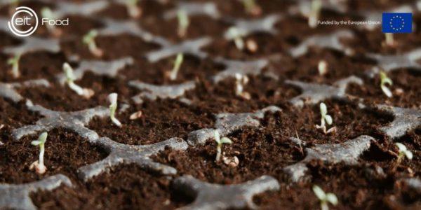 Programa EIT Food Seedbed Incubator: Convocatòria Oberta