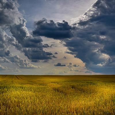 El paper de l'agricultura en les emissions de gasos d'efecte hivernacle