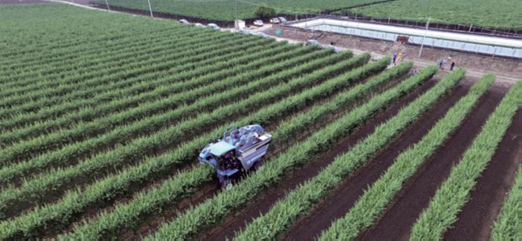 La intensificació sostenible com a resposta al Pacte Verd de la Unió Europea: reptes i exemples a la producció fructícola i en el consum alimentari
